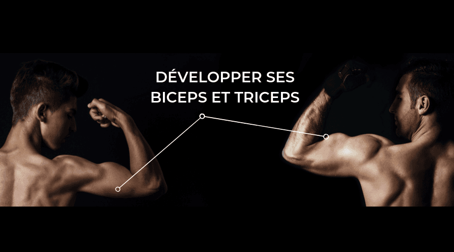 exerices biceps et exercices triceps